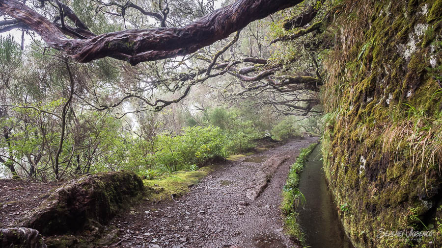 Levada in the rain mountain forest