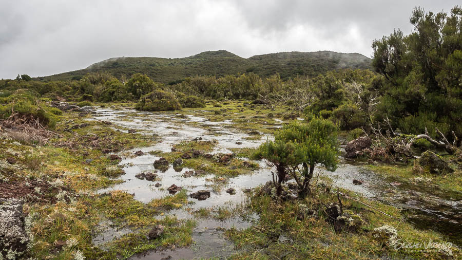 swamps in mountains
