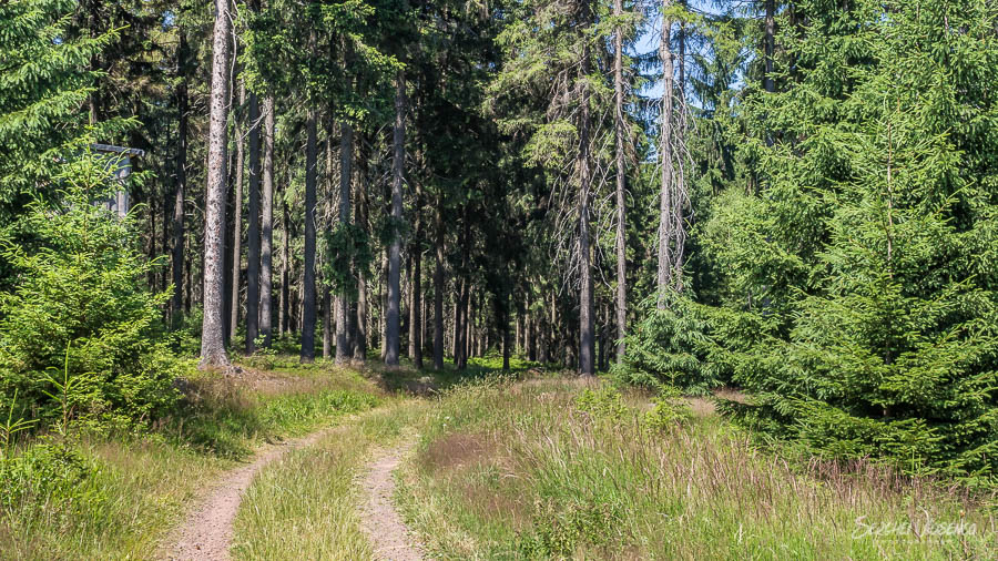 Hiking trail in the green forest